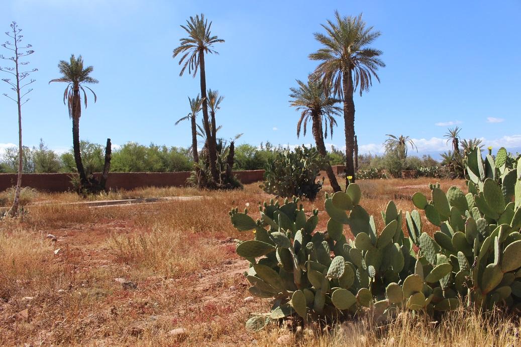 Land For Sale Marrakech - Riads For Sale Marrakech - Terrain A Vendre Marrakech