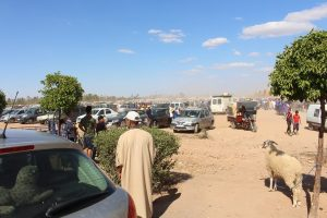 Marrakech Sheep Market from Bosworth Property - Riads For Sale Marrakech