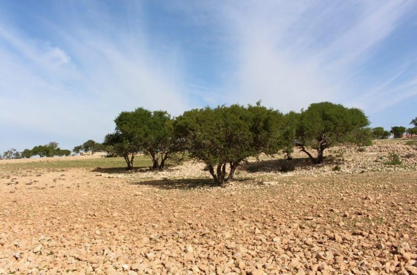 Land-For-Sale-Sidi-Kaouki-from-Bosworth-Property-Marrakech-Real-Estate-Riads-For-Sale-Marrakech-Immobilier-Marrakech-Terrain-A-Vendre-Essaouira-14-1024x683