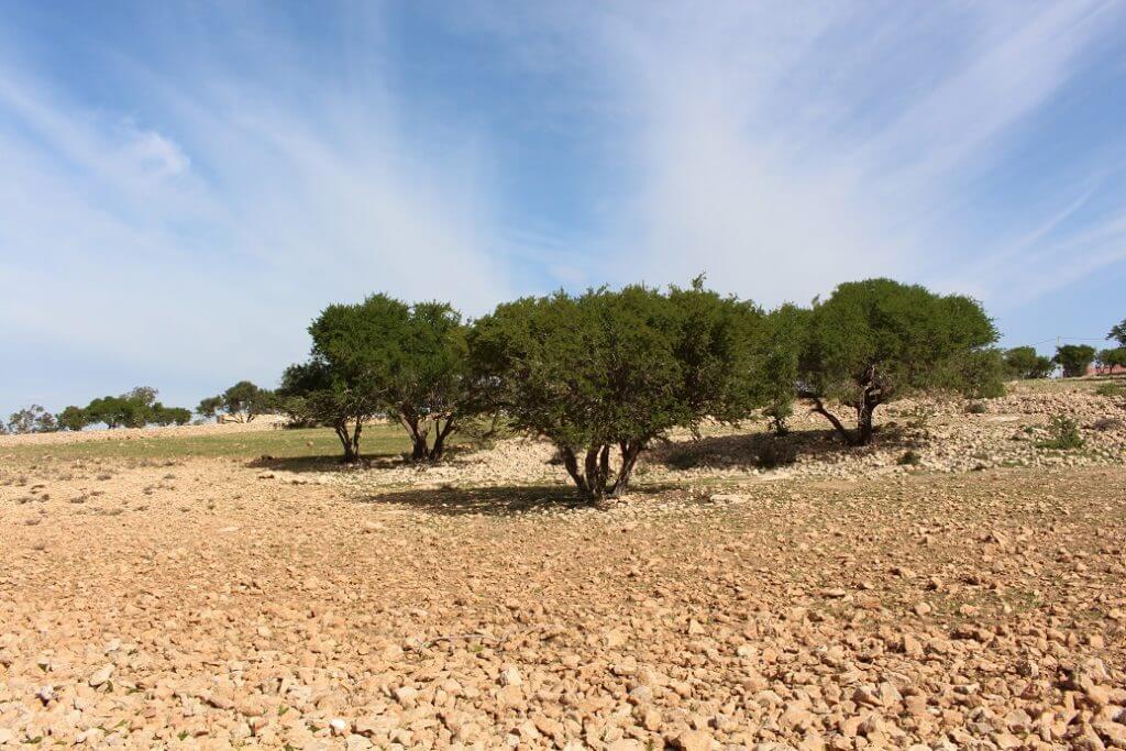 5 hectares with sea view near Sidi Kaouki