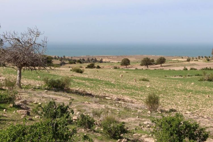 Land For Sale Sidi Kaouki From Bosworth Property Marrakech Real Estate Riads For Sale Marrakech Immobilier Marrakech Terrain A Vendre Essaouira X X also Image X likewise En Gphoto likewise Farmto Table furthermore Team  munication. on invest in morocco testimonials