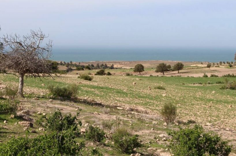 Land-For-Sale-Sidi-Kaouki-from-Bosworth-Property-Marrakech-Real-Estate-Riads-For-Sale-Marrakech-Immobilier-Marrakech-Terrain-A-Vendre-Essaouira-18-1024x683