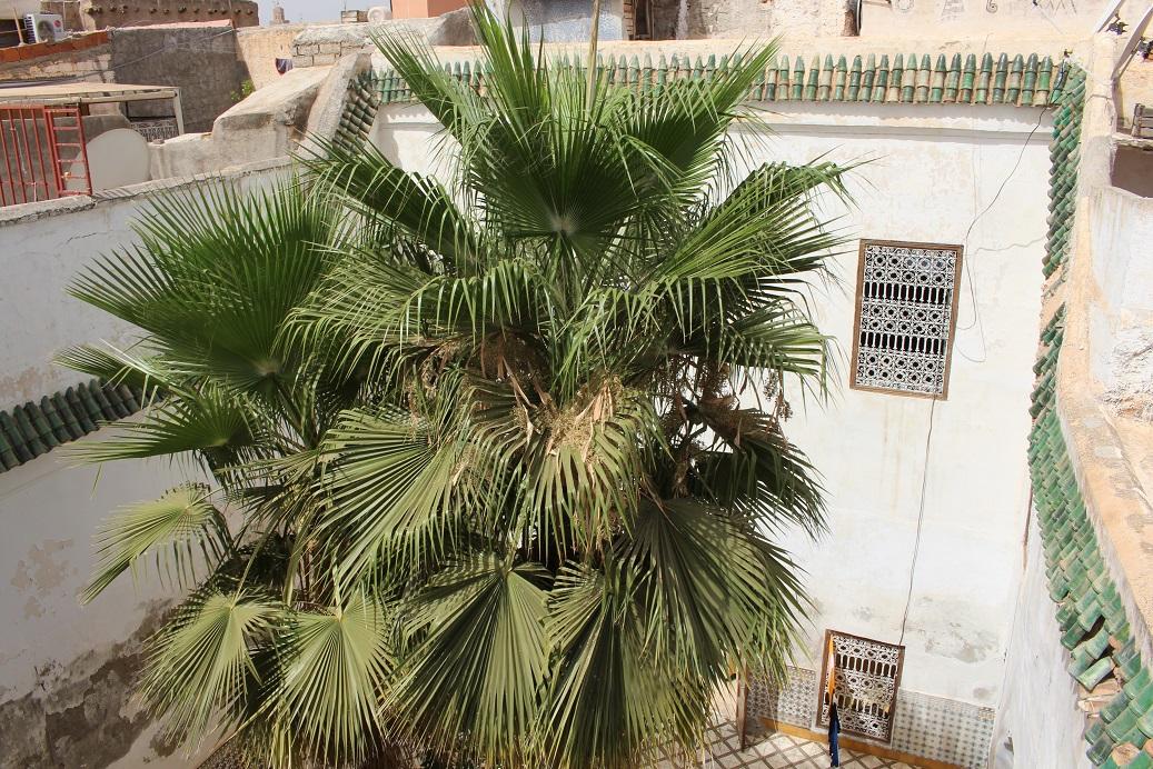 Superb Riad To Renovate Marrakech - Riads For Sale Marrakech - Marrakech Real Estate - Marrakech Realty - Immobilier Marrakech - Riads a Vendre Marrakech